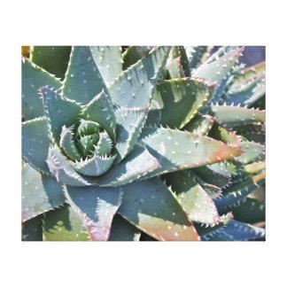 Aloe brevifolia by Debra Lee Baldwin Canvas Print