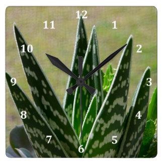 "Aloe ""Gator"" Variegata Succulent Square Wall Clock"