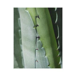 Aloe - Macro Fine Art Photograph Canvas Print