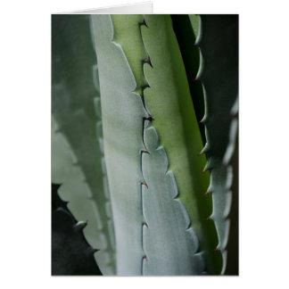 Aloe - Macro Fine Art Photograph Card