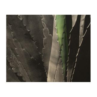 Aloe - Macro Fine Art Photograph in Black & White