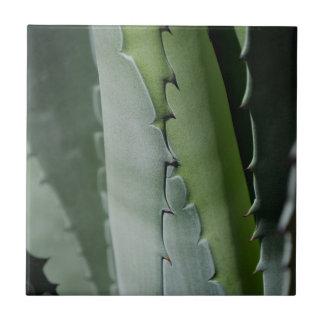 Aloe - Macro Fine Art Photograph Tile