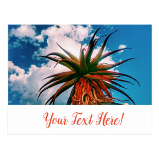Aloe Succulent Orange Green Plant Postcard