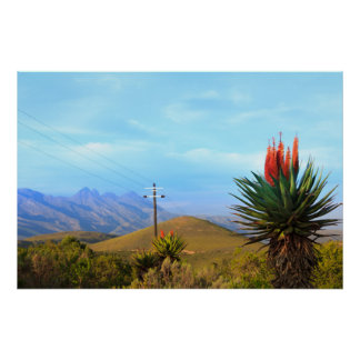 Aloe Vera on Baviaanskloof, Eastern Cape Poster