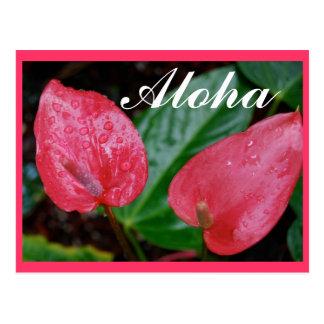 Aloha Hawaii Anthurium Postcard