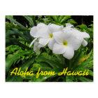 Aloha Hawaii White Plumeria Tropical Flower Postcard