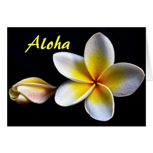 Aloha Hawaiian Frangipani Blossoms Plumerias Greeting Card