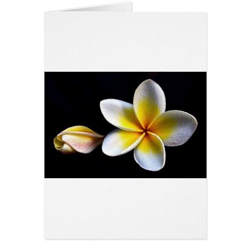 Aloha Hawaiian Frangipani Blossoms Plumerias Cards