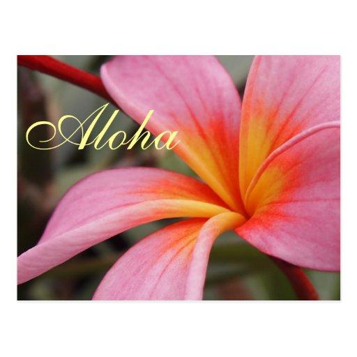 Aloha Hawaiian Frangipani Blossoms Plumerias Post Cards