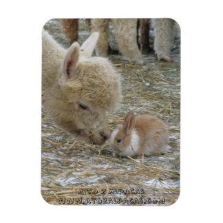 Alpaca and Bunny Kisses! Magnet