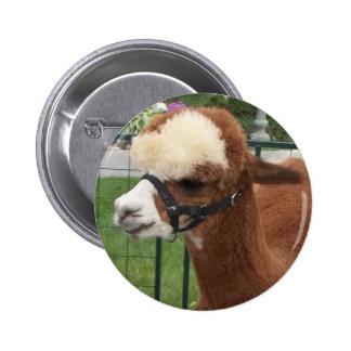Alpaca Buttons