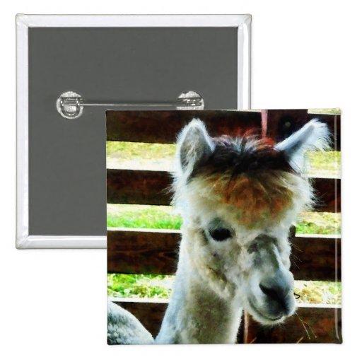 Alpaca Closeup Pinback Button