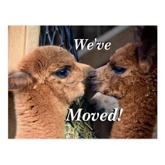 Alpaca couple We've Moved New Address Postcard