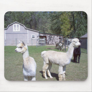 Alpaca Days Mouse Pad