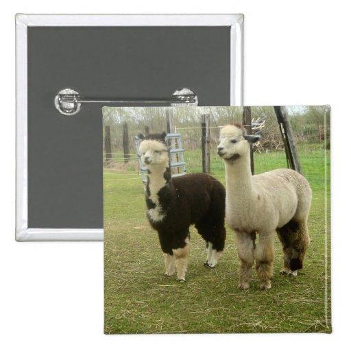 Alpaca Duo Button