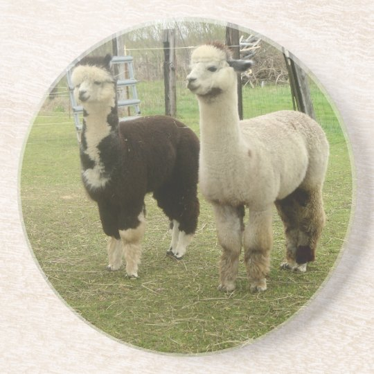 Alpaca Duo Coaster