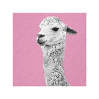 Alpaca farm animal photo nursery kids room canvas print