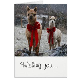 Alpaca Holiday Greeting Card