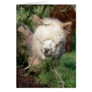 Alpaca in Cedar Card