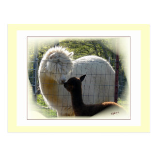 Alpaca Kisses Postcard