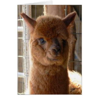 Alpaca Lady Jackie Card