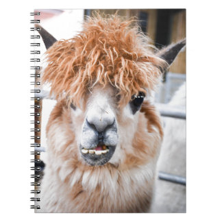Alpaca Notebooks