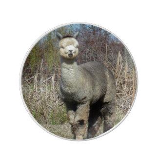 Alpaca Plate