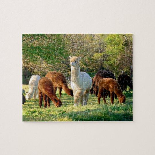 Alpaca Puzzle with Gift Box