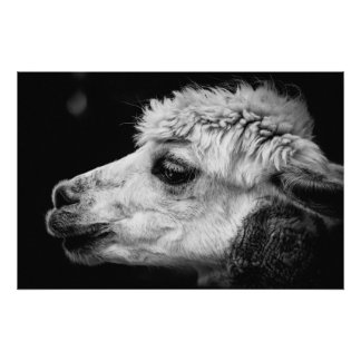 Alpaca side-view portrait poster