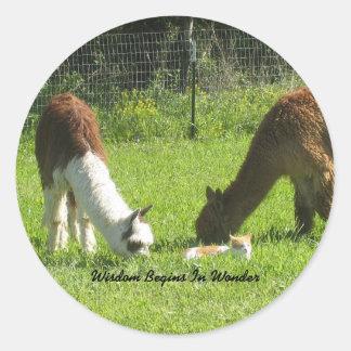 Alpaca Wisdom Begins In Wonder Classic Round Sticker