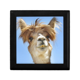 Alpaca with Crazy Hair Gift Box