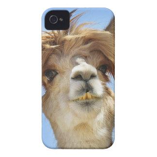 Alpaca with Crazy Hair iPhone 4 Cases
