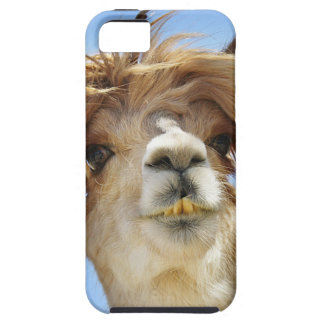 Alpaca with Crazy Hair iPhone 5 Covers
