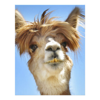 Alpaca with Crazy Hair Letterhead