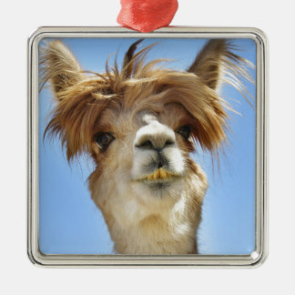 Alpaca with Crazy Hair Metal Ornament