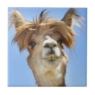 Alpaca with Crazy Hair Tile