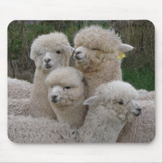 Alpacas Closeup Mouse Pad