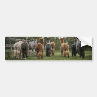 Alpacas in Motion Bumper Sticker