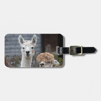 Alpacas Luggage Tag
