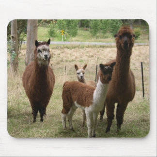 Alpacas Mouse Pad