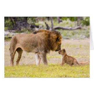 Alpha male lion inspects cub card