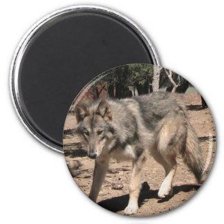 Alpha Wolf Magnet