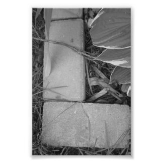 Alphabet Letter Photography L5 Black and White 4x6 Photo