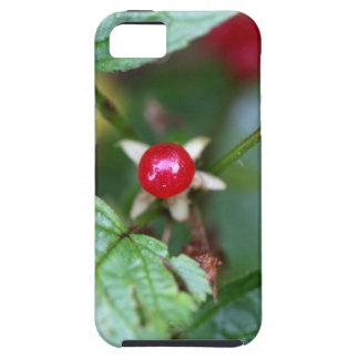 Alpine currant (Ribes alpinum) iPhone 5 Cover