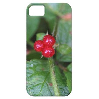 Alpine currant (Ribes alpinum) iPhone 5 Covers