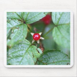 Alpine currant (Ribes alpinum) Mouse Pad