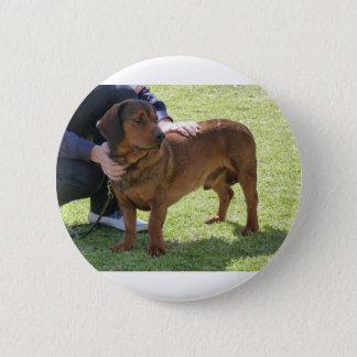 Alpine Dachsbracke Dog 2 Inch Round Button