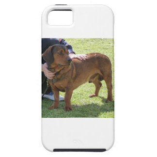 Alpine Dachsbracke Dog iPhone 5 Cases