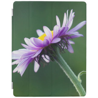 Alpine Daisy iPad Cover