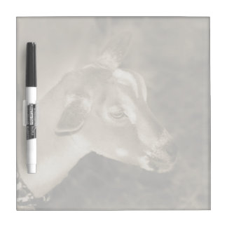 Alpine doe sepia shaved baby goat striped face dry erase boards